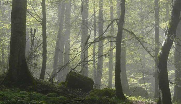 زنگ خطر برای جنگل های هیرکانی نواخته شد