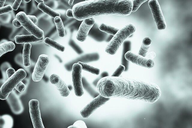 ریزحامل هایی که باکتری ها را فریب می دهند!