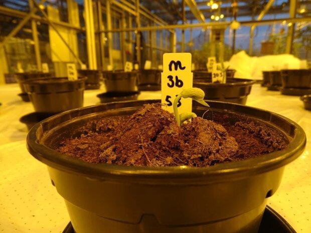 ادرار انسان به رشد گیاهان در ماه و مریخ یاری می نماید